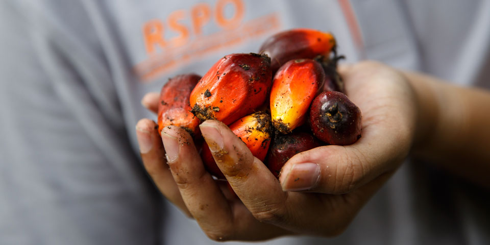 BASF, The Estée Lauder Companies, RSPO and Solidaridad partner for Sustainable Palm Project