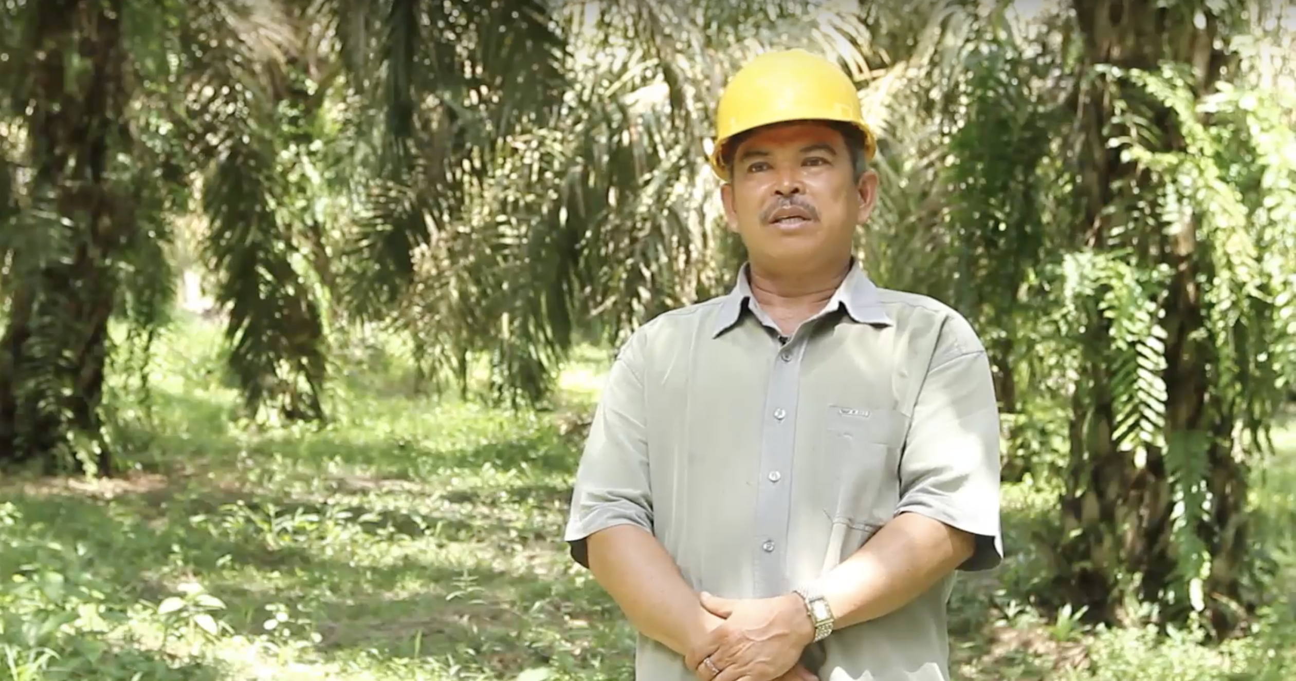 An oil palm farmer's positive impact on the environment